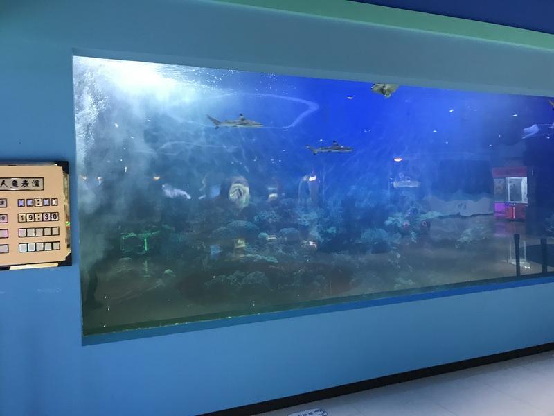 绿地皮皮虾 (1).JPG
